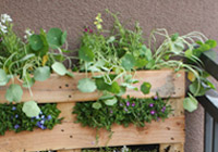 A pallet garden for small spaces