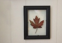 Crafts for the non-crafty: Floating pressed leaf wall art