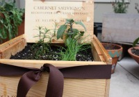 Herb garden in a box