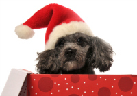 What to do when your child wants a pet for Christmas