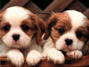 10 Facts About Puppies Even Dog People Don't Know
