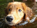 If You're in the Market for a Swimming Partner, These Water Dogs Are Perfect