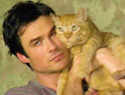 20 Sizzling GIFs of Ian Somerhalder