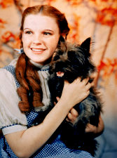 Judy Garland as Dorothy in the Wizard of Oz