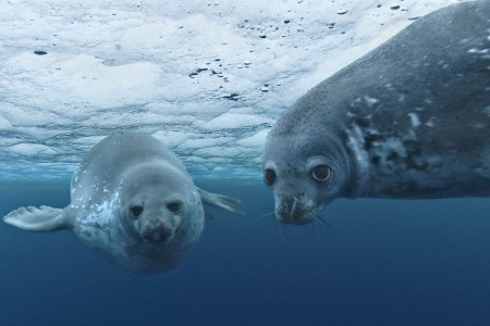 Disneynature visits the Oceans