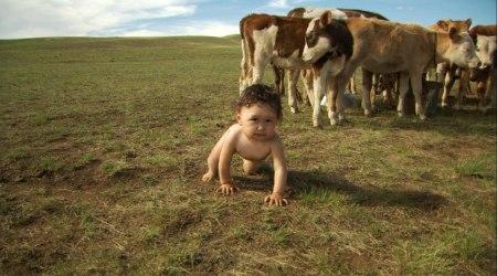 """A wildlife film of human babies"""