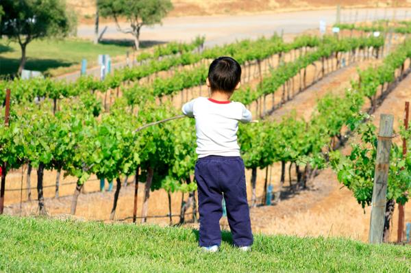 Boy at winery