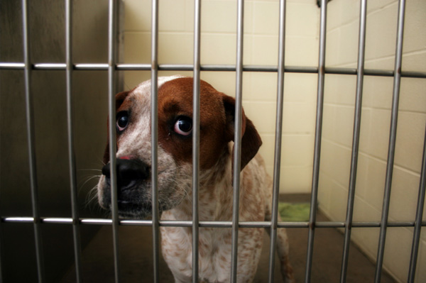 Debunking myths about shelter dogs