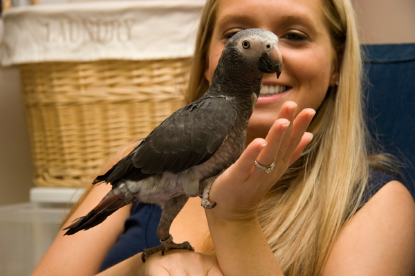 Woman with African gray parrot