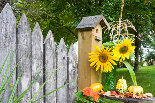 Fall garden with birdhouse