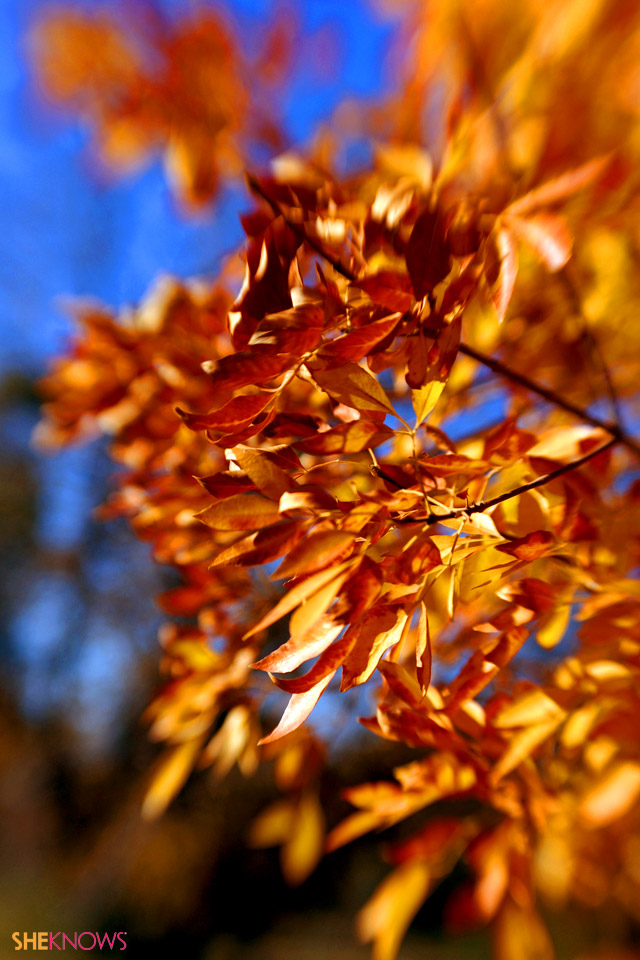 fall leaves iphone wallpaper images pictures becuo