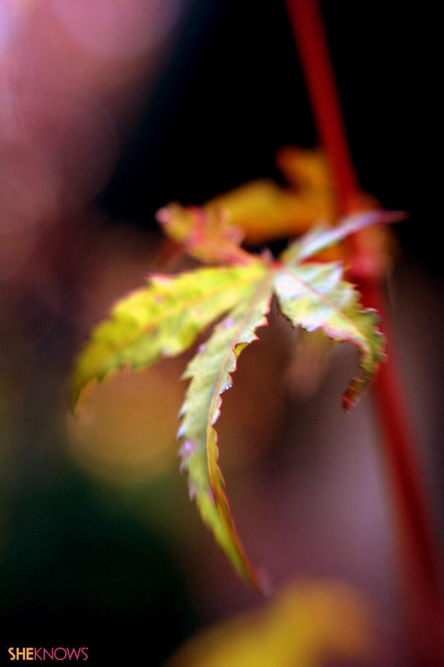 iPhone skin - autumn leaves