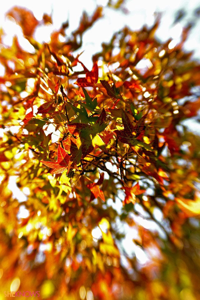 iPhone skin - autumn leaves