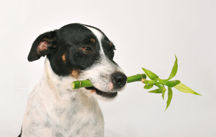 Ensure Your Plants Are Pet-Friendly.