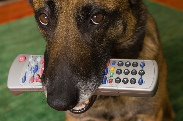 Dog chewing on remote