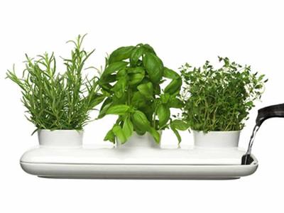 herb trio pot