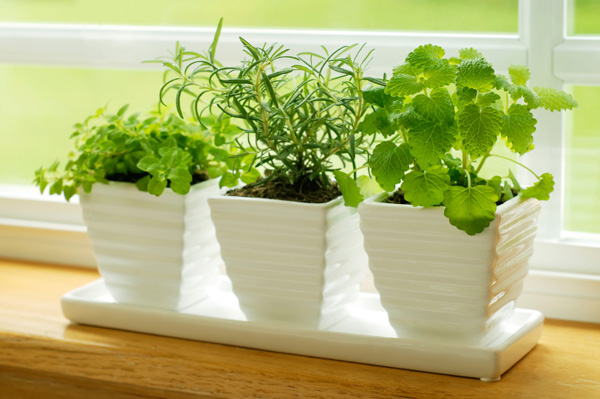 Try a container garden