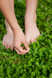 Plant clover ground cover for Irish luck year-round