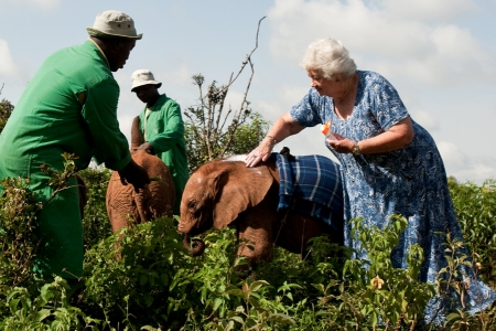 Born to be Wild tells the story of Dr. Dame Daphne M. Sheldrick