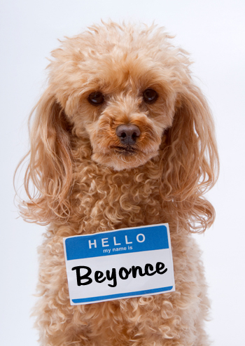 Dog named beyonce
