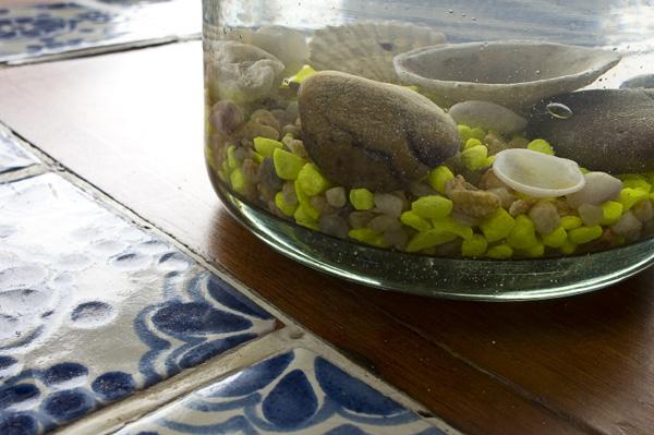 Sea shells in vase