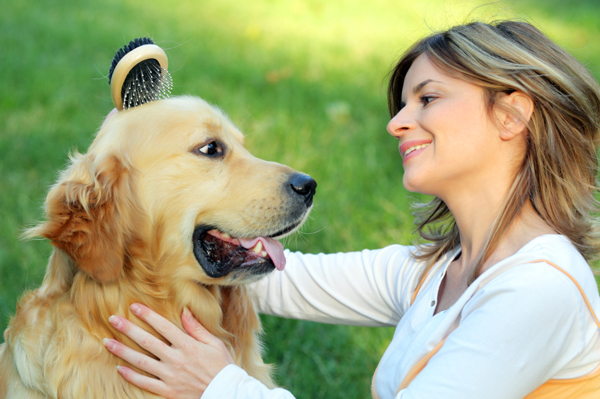 Woman brushing dog
