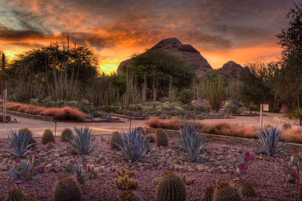 Visit the Desert Botanical Garden on National Public Gardens Day