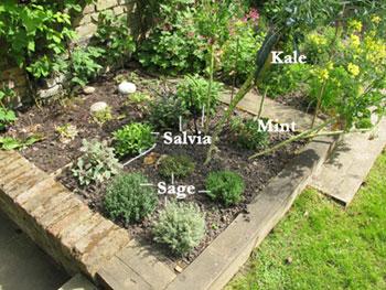 How does Gwyneth's garden grow?