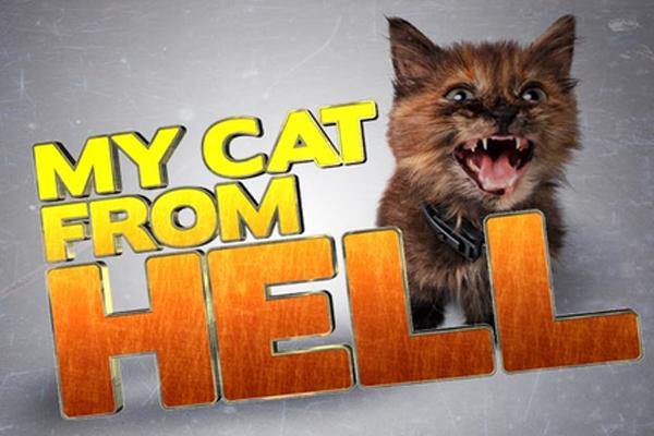 猫ヘルパー