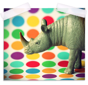 Polka Dot Rhino Fine Art Photography Print