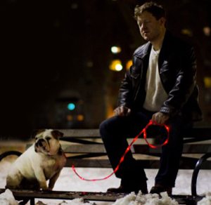 Light up dog leash
