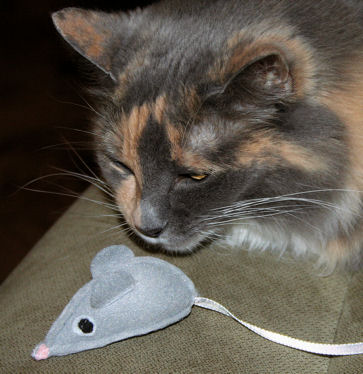 Play cat & mouse