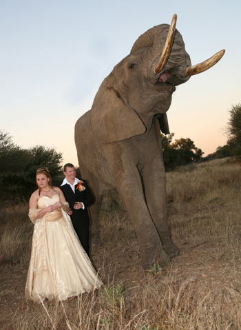 Wedding with elephant