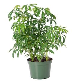 6 houseplants you can keep alive - Common house plants names ...