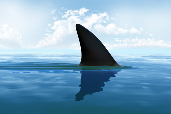 Shark fin ban in California