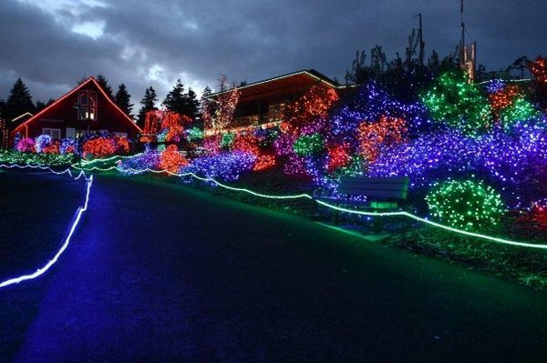 Plan a trip to this zoo lights show