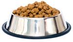 dog food bowl