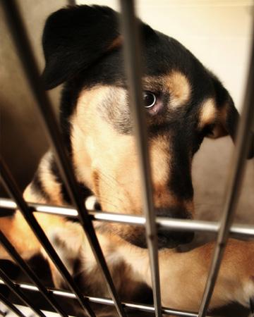 Sad mixed breed dog