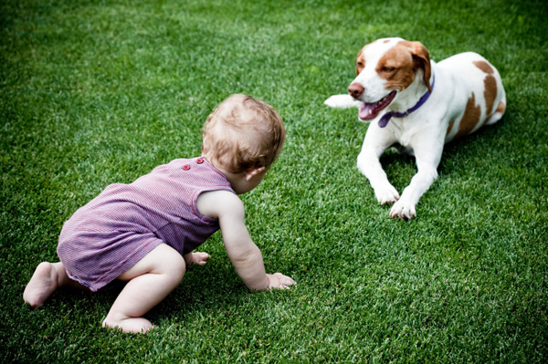 Baby crawling towards dog