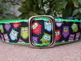 Silly owls quick release collar