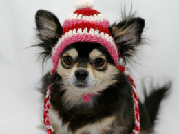 Valentine's Day crocheted dog hat