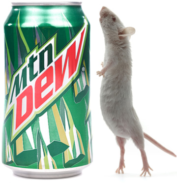 a mountain dew and a live mouse