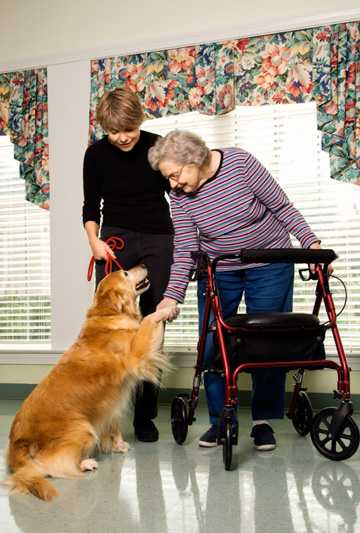 Therapy dog at nursing home