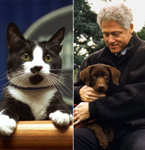President:  Bill Clinton witth Socks and Buddy