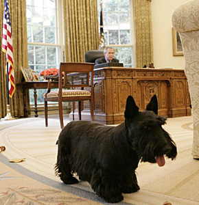 President: George W. Bush and Barney