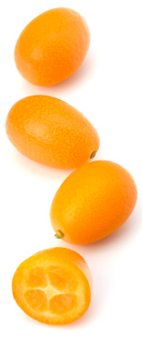 kumquat