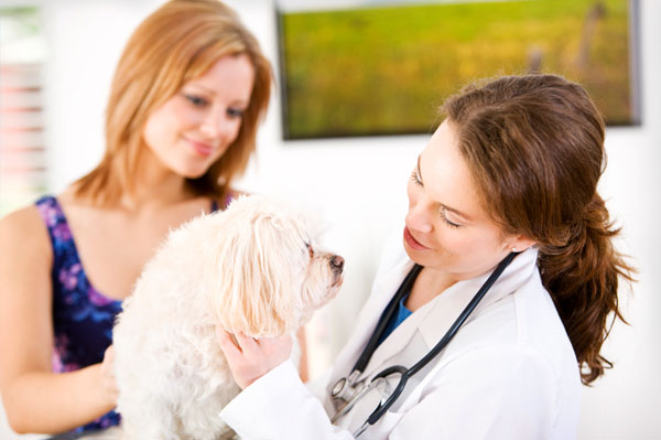 Health risks for small dogs