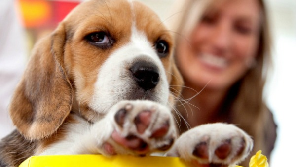 Best dog breeds to suit your lifestyle