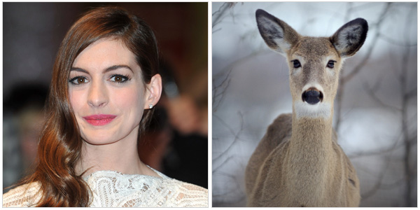 Anne Hathaway and a doe