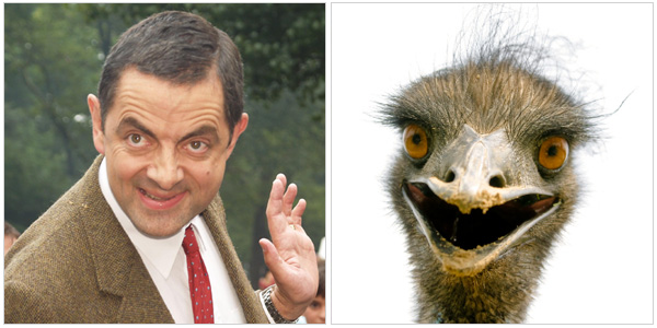 Mr. Bean and an emu